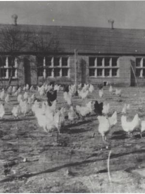 Holy Trinity Episcopal Church, Wyoming, Michigan, chicken coop worship building, 1959