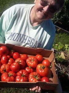 Harvesting tomatoes for food pantries at Holy Trinity Episcopal Wyoming, Wyoming.